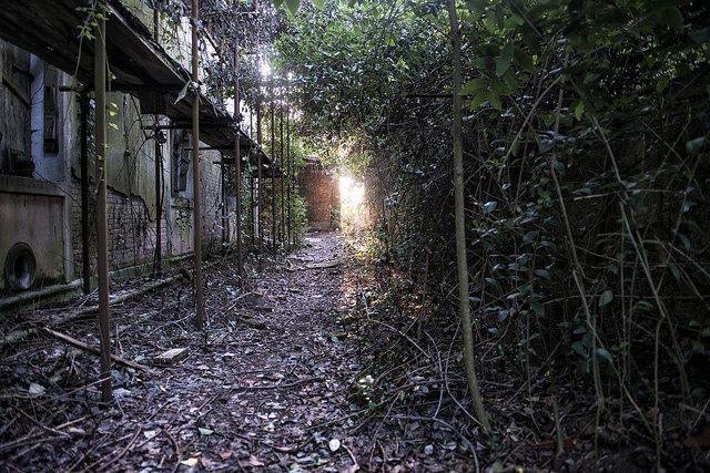 Poveglia-Island-abandoned-venice-italy-6
