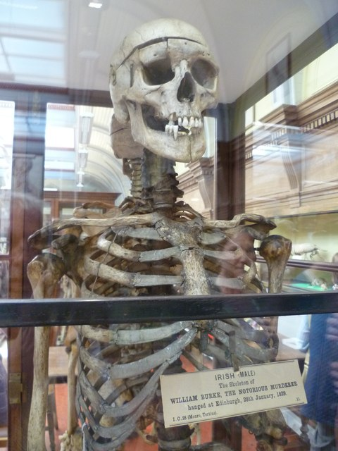 Burke's Skeleton