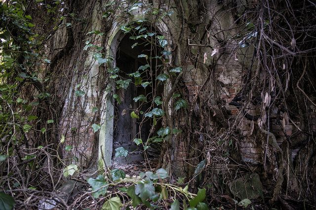 Poveglia-Island-abandoned-venice-italy-5
