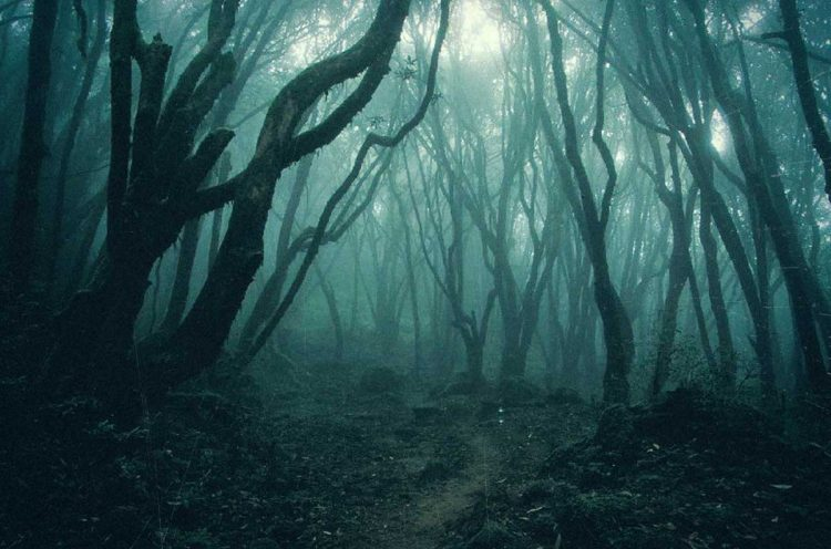 The Terrifying Forest where People go to Die!